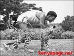 antao-cheetah