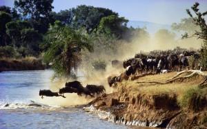 Wilderbeest-Migration-Kenya-300x187